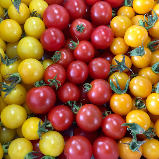 3色 ミニトマト 3.5kg 食品/飲料/酒の食品(野菜)の商品写真