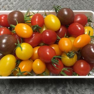 プチぷよ入りカラフルミニトマト 3kg(野菜)