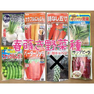 野菜の種セット 6種類(野菜)