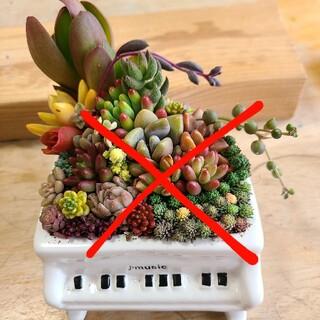 多肉植物 寄せ植え完売 たっぷりもりもり💪グランドピアノ白(その他)