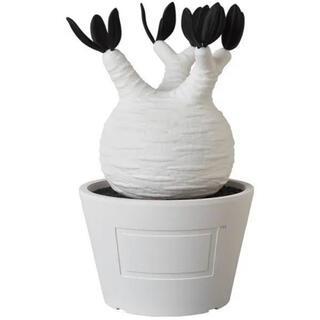 メディコムトイ(MEDICOM TOY)のVCD Pachypodium Gracilius white BOTANIZE(その他)