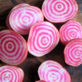 【超かわいい‼️】キャンディビーツの種20粒 野菜 ビーツ ビート 種 タネ(野菜)