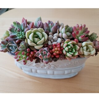 多肉植物 寄せ植え ホワイトピンク鉢(その他)