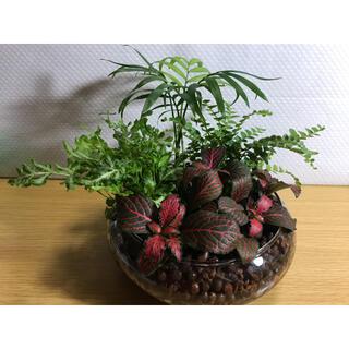 専用商品 観葉植物 11(その他)