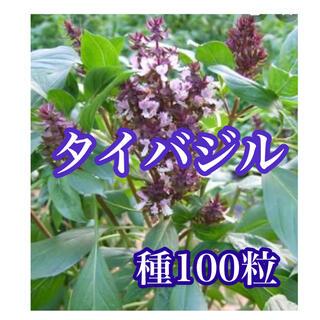 タイバジルの種100粒(その他)