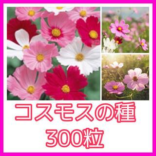 コスモス(ミックス)5g約500粒(その他)