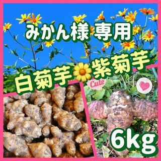 【みかん様 専用】白菊芋&紫菊芋(野菜)