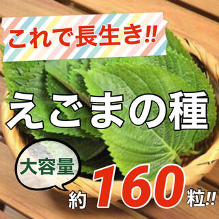 【栄養満点‼️】えごまの種 1ml(約160粒) エゴマ ハーブ 野菜 タネ 種(野菜)