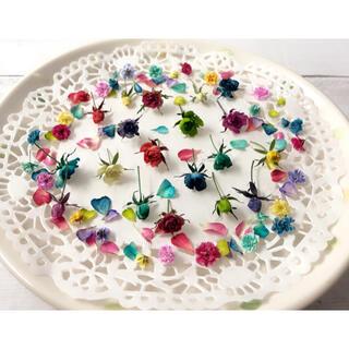 ドライフラワー 花材 素材 極小ミニバラ リトルウッズ カラフルMIX(各種パーツ)