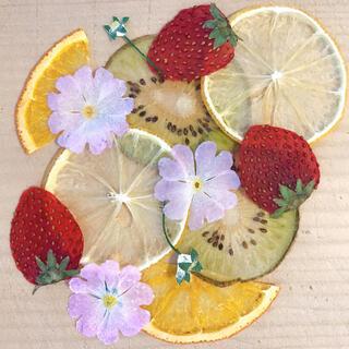 押し花 フルーツ 画像加工なし(各種パーツ)