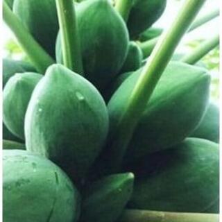 RT『青パパイヤ 10キロ』島野菜 タイアジア食材 グリーンパパイヤ(野菜)