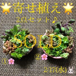 多肉植物❤︎寄せ植え❤︎このまま飾れます❤︎2点セット♪(その他)