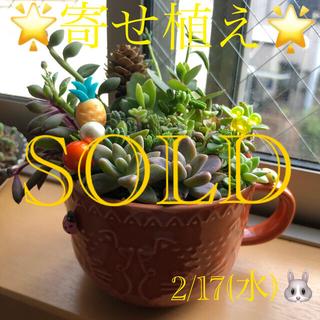 多肉植物❤︎寄せ植え❤︎このまま飾れます❤︎猫ちゃんマグ♪(その他)