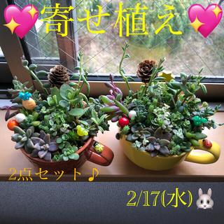 専用❤︎多肉植物❤︎寄せ植え❤︎2点おまとめセット+桜色の小鉢セット♪(その他)