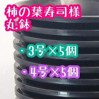 柿の葉寿司様 丸鉢(その他)