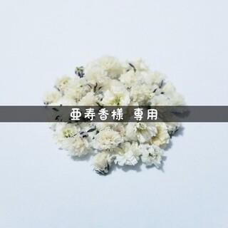 【亜寿香様専用】かすみ草のドライフラワー(ドライフラワー)