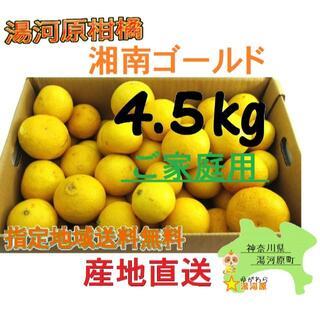 湘南ゴールド 🍊ご家庭用に♪ 4.5kg 訳あり不選別 4.5キロ 希少品種.(フルーツ)