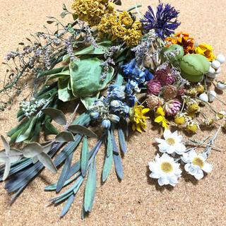 [お値下げ]春の装い ハーバリウム レジン 花材 素材 ナチュラル U(ドライフラワー)