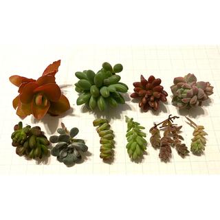 多肉植物✨寄せ植え用✨カット苗10種類(その他)