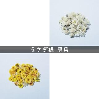 【うさぎ様専用】かすみ草のドライフラワー(ドライフラワー)