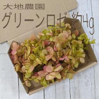 グリーンロゼ☆紫陽花☆約4g(プリザーブドフラワー)
