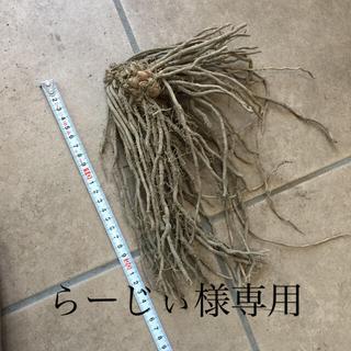 らーじぃ様専用(野菜)