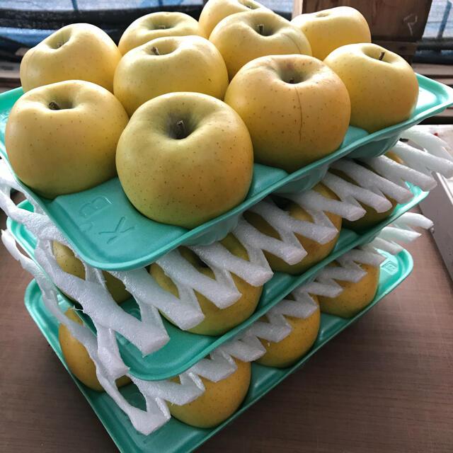 【送料込】葉とらずりんご シナノゴールド 約10kg 食品/飲料/酒の食品(フルーツ)の商品写真
