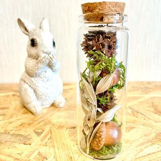 森の木の実のどんぐり瓶♫(ドライフラワー)