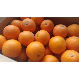 【農家直送】ネーブルオレンジ Mサイズ 5キロ 送料込 (フルーツ)