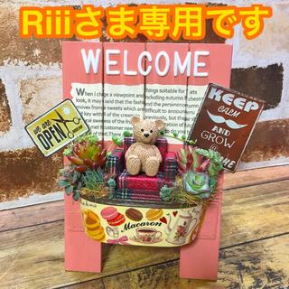 多肉植物の寄せ植え ウェルカムボード(pink)(その他)