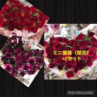 mignon様専用★ミニ薔薇(開花)×2セット&ミニ薔薇×1セット★計3セット★(ドライフラワー)