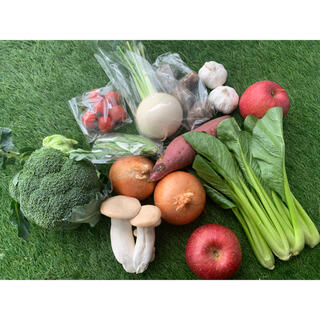 ★60サイズ★ 無農薬新鮮野菜果物セット 11種類セット(野菜)