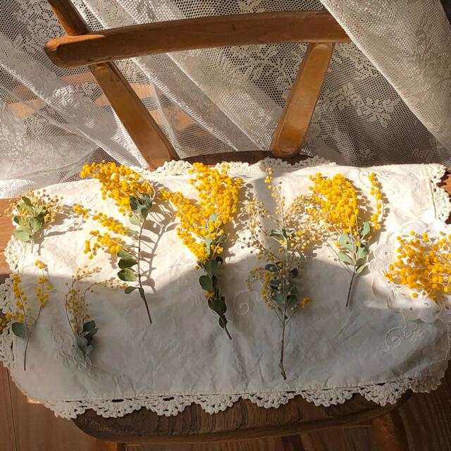 〜真珠葉ミモザドライset〜 ハンドメイドのフラワー/ガーデン(ドライフラワー)の商品写真