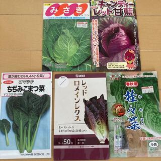 葉物野菜の種子(その他)