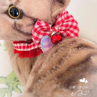 【まみこん様専用】オーダー 猫用首輪(オーダーメイド)