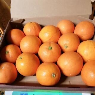 熊本県産 ブラットオレンジ1.3キロ(フルーツ)