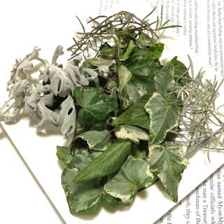 小さなグリーン系の花材 少量 ナチュラル 素材 自然 X(ドライフラワー)