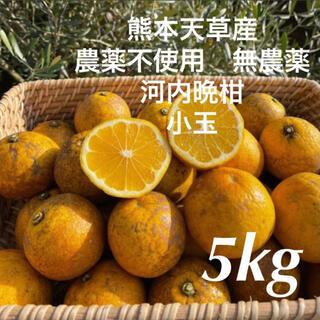 農薬不使用 無農薬 小玉 落下 河内晩柑 (和製グレープフルーツ)5kg 熊本産(フルーツ)