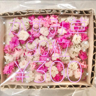かすみ草 ドライフラワー ピンク&ホワイトmix(ドライフラワー)