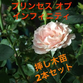 2本【薔薇】プリンセス オブ インフィニティ 抜き苗 薄ピンク(その他)