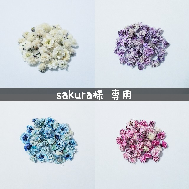 【sakura♡様専用】かすみ草のドライフラワー ハンドメイドのフラワー/ガーデン(ドライフラワー)の商品写真