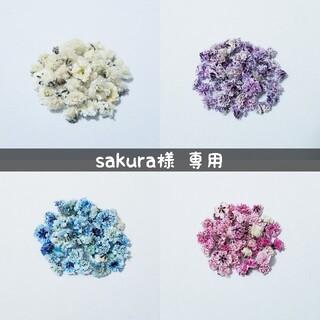 【sakura♡様専用】かすみ草のドライフラワー(ドライフラワー)