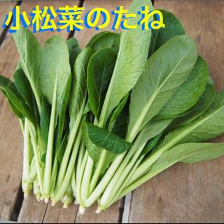 小松菜 種 50粒(野菜)