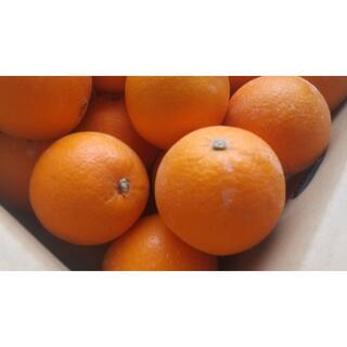 【農家直送】ネーブルオレンジ Mサイズ 5キロ 送料込(フルーツ)