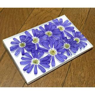 a⑦ 銀の紫陽花が作った大きな深海ブルーのサイネリアのドライフラワーです‼️(ドライフラワー)