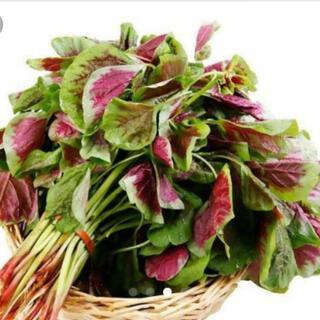 紫ひゆ菜   (バイアム)野菜の種  50個x2(野菜)