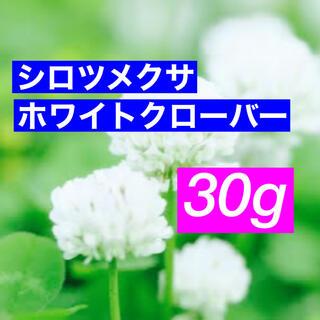 【最安値】シロツメクサ、ホワイトクローバーの種 30g   芝生、雑草対策に!(プランター)