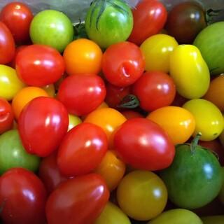 【期間限定】ミニトマトの種 8種類(その他)