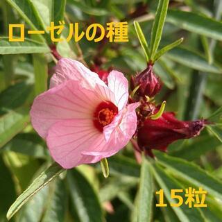 無農薬栽培 ローゼルの種 15粒(野菜)