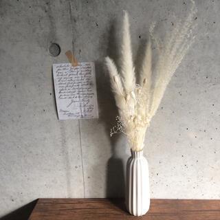 パンパスグラス アイボリー×ホワイトセット #1 ドライフラワー(ドライフラワー)
